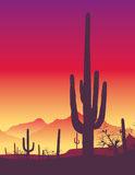 Cactus. The silhouette of a cactus in the desert sunset Stock Photos