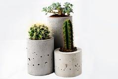 Cactus-1 Royalty-vrije Stock Afbeelding