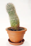 Cactus Photo stock