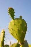 Cactus Stock Images