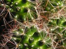 Cactus. Macro uptake from a cactus stock photos
