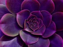 Cactus foto de archivo libre de regalías