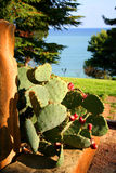 Cactus. Beautiful cactus over the seaside Stock Photo