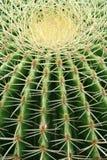 Cactus. Closeup of a giant cactus plant stock image