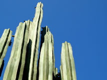 Cactus Stock Photos