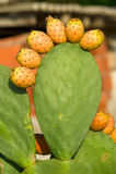 Cactus royalty-vrije stock afbeeldingen