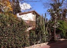 Cactus 2009 di Neve Monosson Immagini Stock