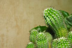 Free Cactus Stock Photo - 2162130