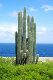 Cactus. Tree in a park by the sea Royalty Free Stock Photo
