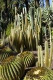 Cactus Stock Photos