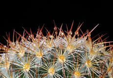Cactus. Stock Photography