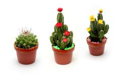 Cactus. Cute Cactus isolated on white background Royalty Free Stock Photos