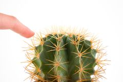 Cactus. On the white background stock photo