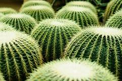 Cactus Image stock