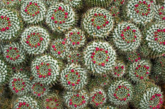 Cactus Stock Afbeeldingen