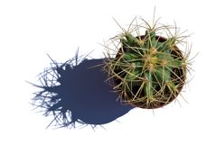 Cactus. And its shadow isolated Stock Photos