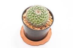 Cactus. Royalty-vrije Stock Afbeeldingen
