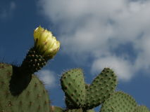 Cactus photos stock