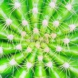 Cactus Fotografía de archivo libre de regalías