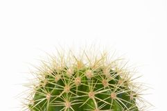 Cactus. A cactus isolated on white background Stock Photo