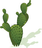 Cactus royalty free illustration