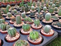 Cactus Photo libre de droits