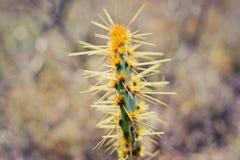 Cactus 1 Royalty-vrije Stock Fotografie