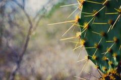 Cactus 5 Royalty-vrije Stock Afbeelding