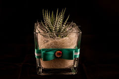 Cactus02 Fotos de Stock Royalty Free