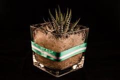 Cactus01 στοκ εικόνα