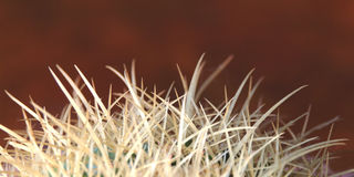 Cactus. Extreme closeup of needles on surface of cactus Stock Image
