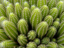 Free Cactus Stock Photos - 4855243