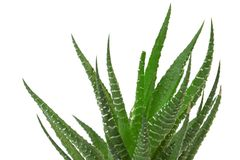 Free Cactus Stock Photos - 5635083