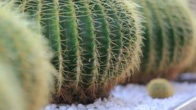 Cactus banque de vidéos