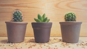 3 cactus Photographie stock