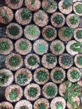 Cactus Fotografía de archivo