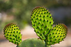 Cactus Photographie stock