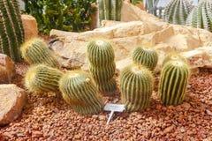 Cactus fotos de archivo