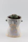 Cactus Image libre de droits