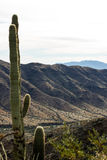Cactus 2 Image libre de droits