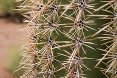 Cactus 4 Photographie stock libre de droits