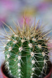 Cactus. A cactus shot with shallow depth of field Stock Photo