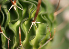 Cactus. Closeup. Abstract background Stock Photo