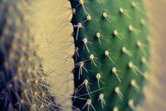 Cactus Fotos de archivo libres de regalías
