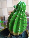 Cactus Photos stock