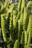 Cactus. A green cactus and its shadows royalty free stock photos