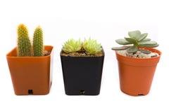 Cactus Imágenes de archivo libres de regalías