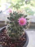 Cactus Immagini Stock