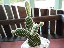 Cactus Immagine Stock Libera da Diritti