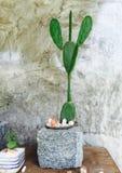 Cactus Images libres de droits
